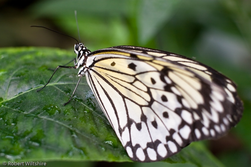365 - Day 80 - Butterfly