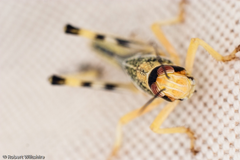365 - Day 99 - Locust