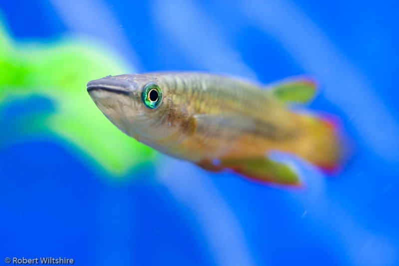 365 - Day 106 - Fish