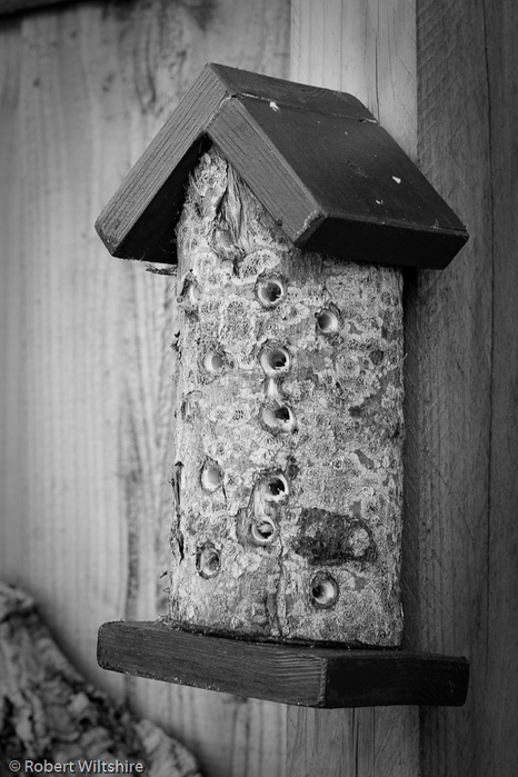 365 - Day 132 - Bug House