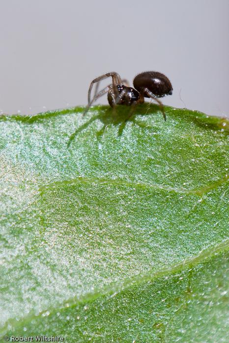 365 - Day 133 - Spider on Leaf