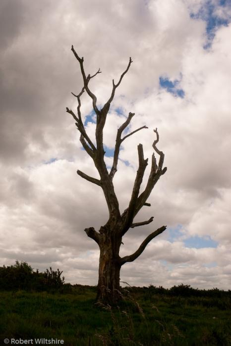 365 - Day 163 - Dead Tree