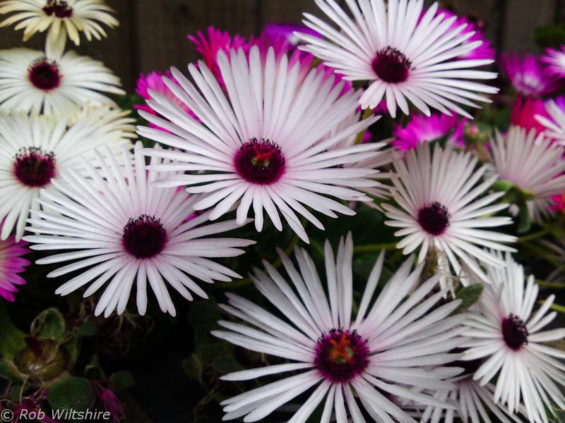 365 - Day 188 - Garden Flowers