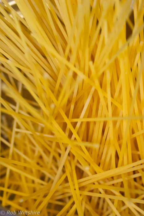365 - Day 224 - Spaghetti