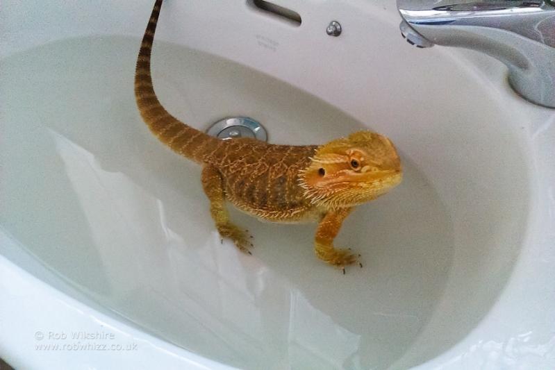 365 - Day 241 - Bath Time