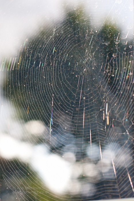 365 - Day 251 - Window Web