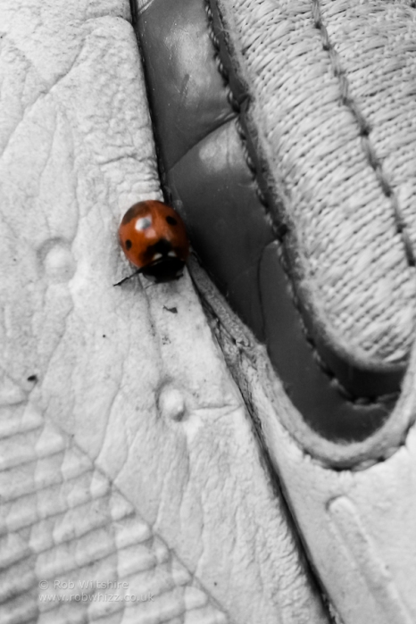 365 - Day 253 - Ladybird Shoe