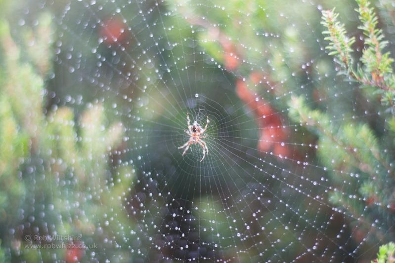 365 - Day 257 - Spider Web