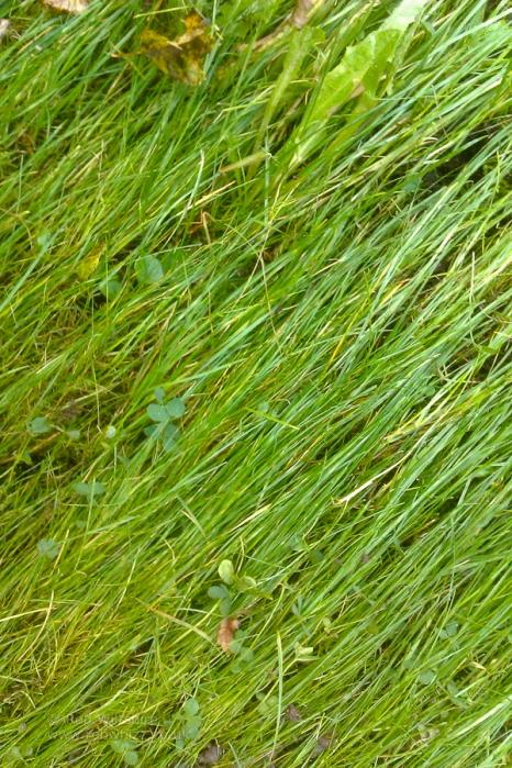 365 - Day 311 - Grass