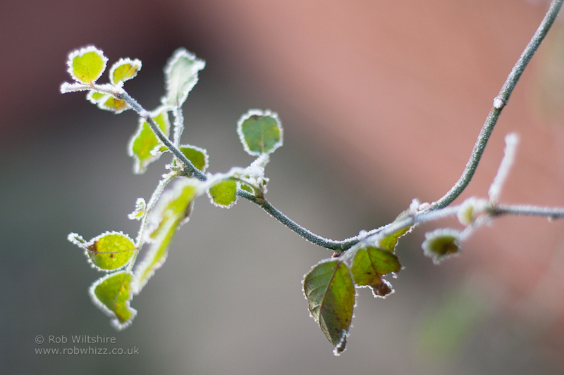 365 - Day 339 - Iced Branch
