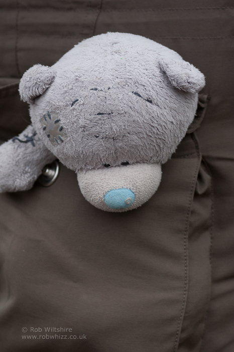 365 - Day 347 - Pocket Bear